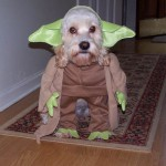 halloween dog costume picture